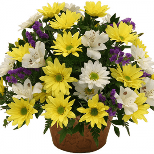 Image of the Basketful of Daisies bouqet